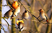 We leave apples on our trees, so birds can enjoy them in the winter.