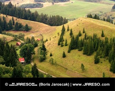 Lone case nella foresta