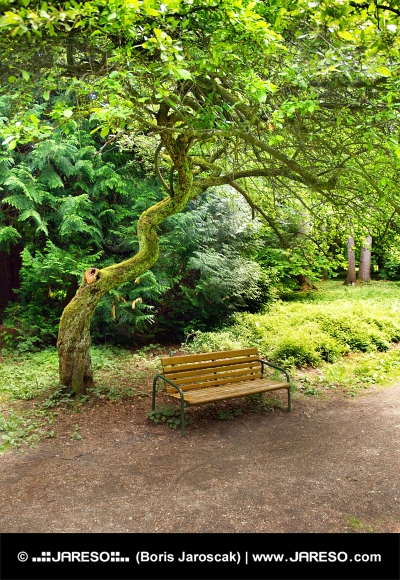 Panchina sotto albero nel parco