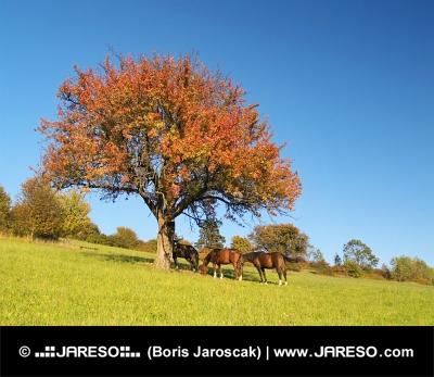 Cavalli sotto l'albero a tarda sera