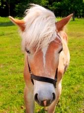 Giovane cavallo sul campo verde