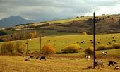 Prato con le mucche durante la giornata d'autunno nuvoloso