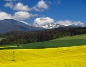 Prato giallo e le montagne in Liptov, Slovacchia