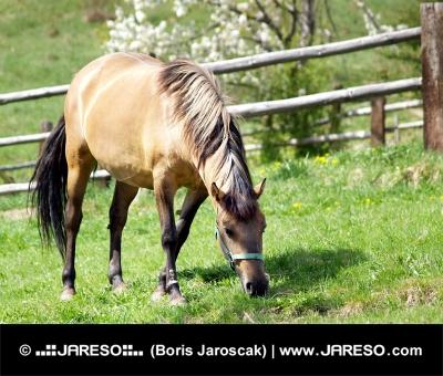 牧草地に馬の放牧