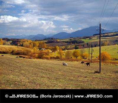 Bobrovnik、スロバキアの近くに牛の放牧
