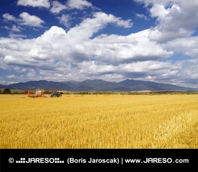 スロバキアでの小麦の収穫