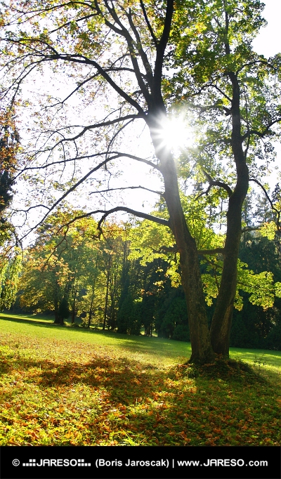 夏の太陽と木々