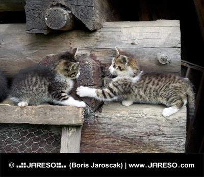 積み重ねられた木材で遊ぶ子猫