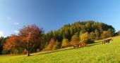 3頭の馬と赤のツリー