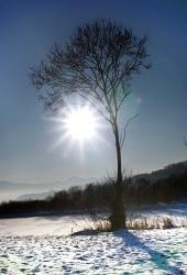 寒い冬の日の太陽と木