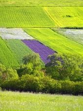 緑の牧草地