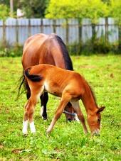 ロバと馬の放牧