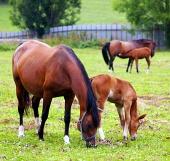 草原に彼らの若い馬と牝馬