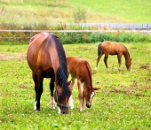 彼女の若い馬とロバ