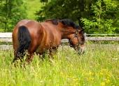 牧草地に馬
