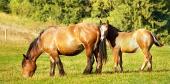 森の近くの牧草地でロバと馬の放牧