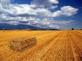 田舎の干し草俵