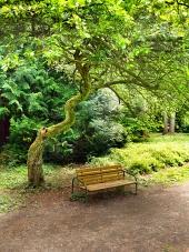 公園内のツリーの下にベンチ