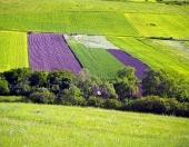 緑の牧草地とフィールド