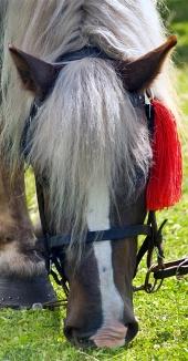 赤いロゼットと馬