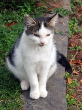 かわいい猫