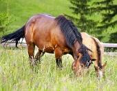 ロバと一緒に馬の放牧