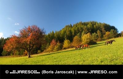 Drie paarden en rode boom