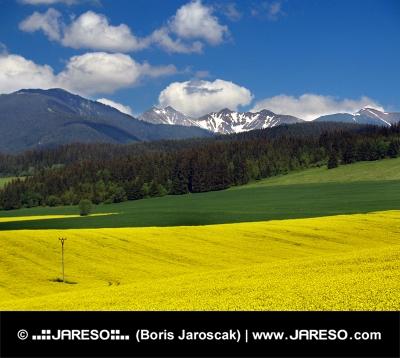 Gele weide en bergen in Liptov, Slowakije