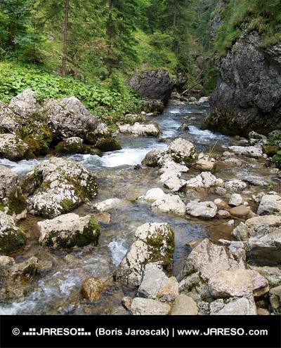 Berg kreek binnen Kvacianska Valley, Slowakije