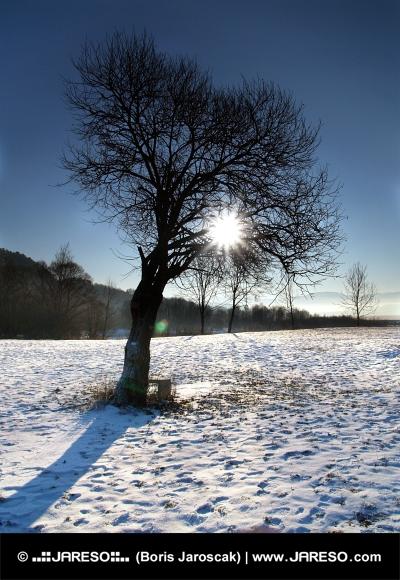 Zon verborgen in de top van de boom in de winter dag