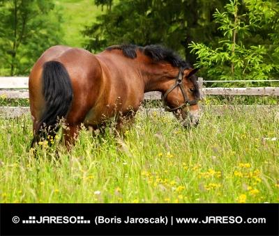Paard op de weide