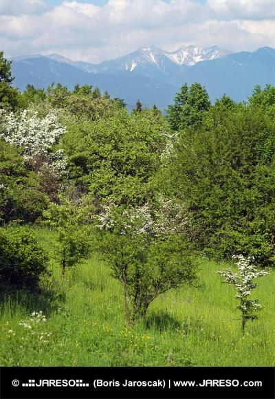 Pieken van Rohace en groene bomen