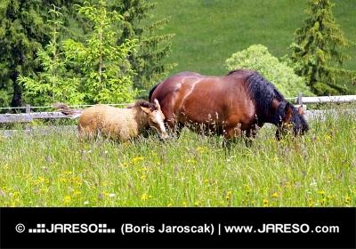 Merrie en veulen grazen in het hoge gras