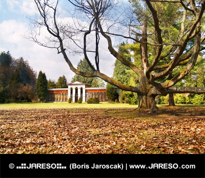 Herfst park met enorme boom en arboretum in Turcianska Stiavnicka, Slowakije
