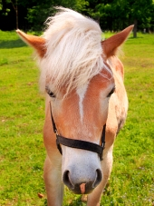 Jong paard op groen veld