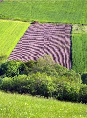 Groene weide en veld