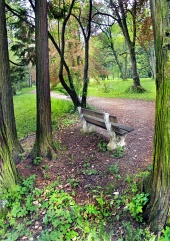 Bench in groen park