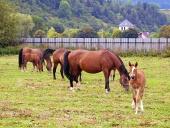 Paarden grazen in het veld