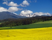 Yellow meadow and mountains ...