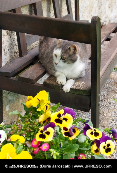Spoczynku kot na drewnianej ławce
