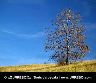 Pojedyncze liściaste drzewo na niebieskim tle