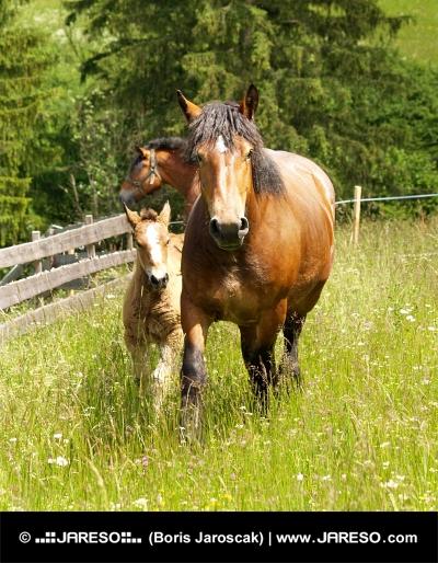 Konie i źrebię na zielonej łące