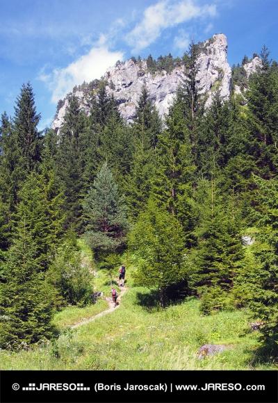 Formacje skalne w dolinie, na Słowacji Vrátna