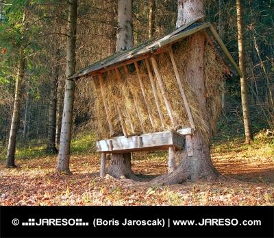 Podajnik przygotowany dla zwierząt w lesie Słowackiej