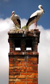 Closeup dwóch bocianów na kominie