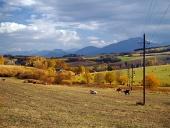 Krowy pasą się w pobliżu wsi Bobrovník, Słowacja