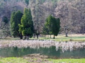 Park i jezioro w Turčianska Štiavnička