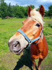 Horse cautati direct în aparatul de fotografiat