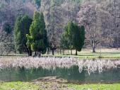 Parcul și lacul în Turčianska Štiavnička