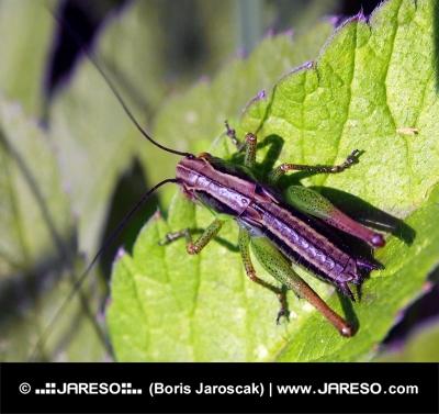 Разноцветное насекомое на листе
